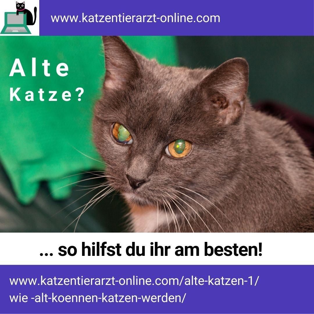 Alte Katze - so hilfst du am besten