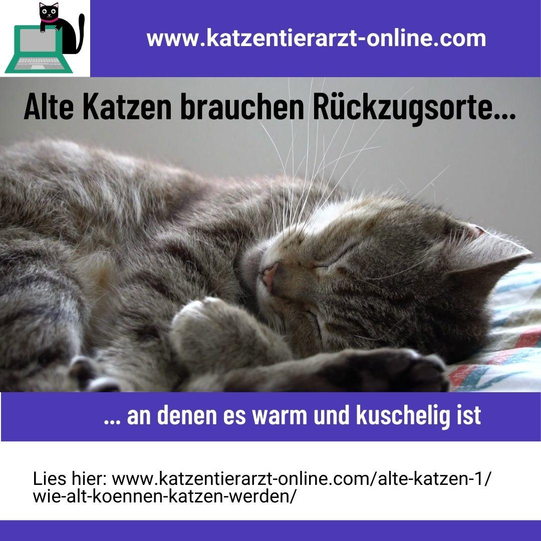 Alte Katzen-Rückzugsorte-kuschelig